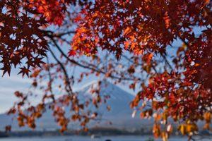 富士山周辺の紅葉